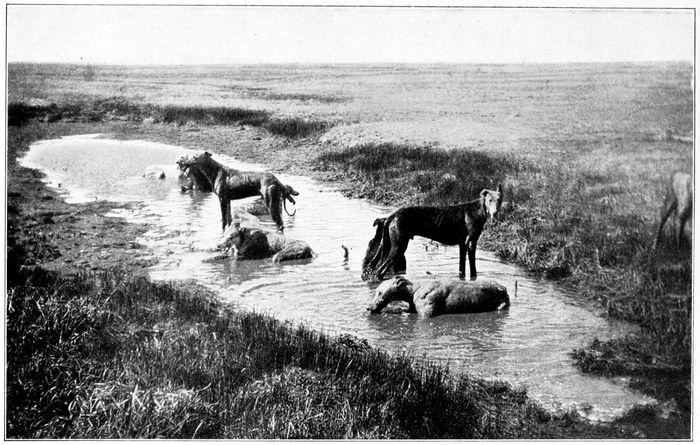 Greyhounds Resting after a Run
