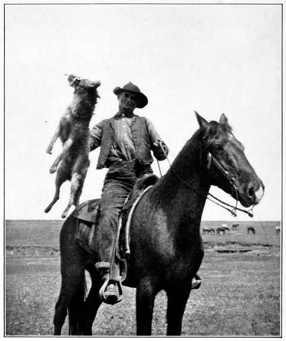 Bony Moore and the Coyote