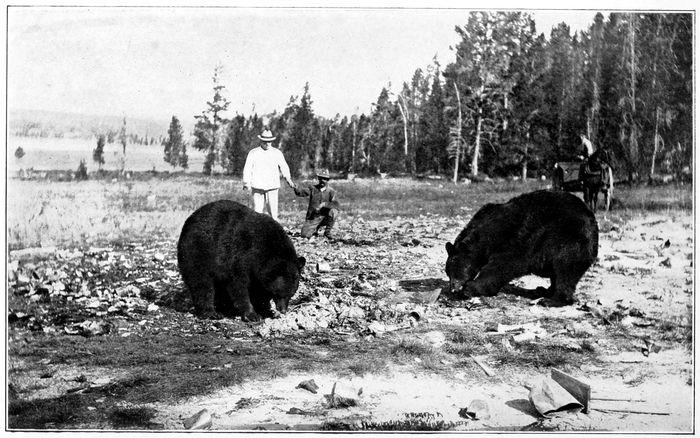 Bears and Tourists